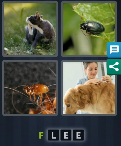 4 Pics 1 word July 13 2020 daily puzzle answer