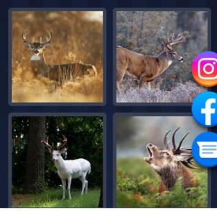 4 Pics 1 word - Deer