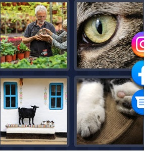 4 Pics 1 Word May 25 2021 answer is Cat