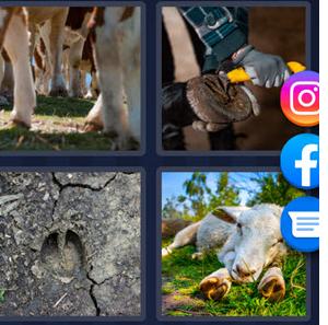 4 pics 1 word May 14 2021 answer