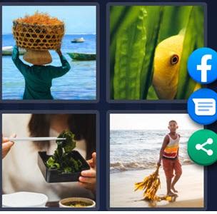 4 Pics 1 Word bonus June 26 2021